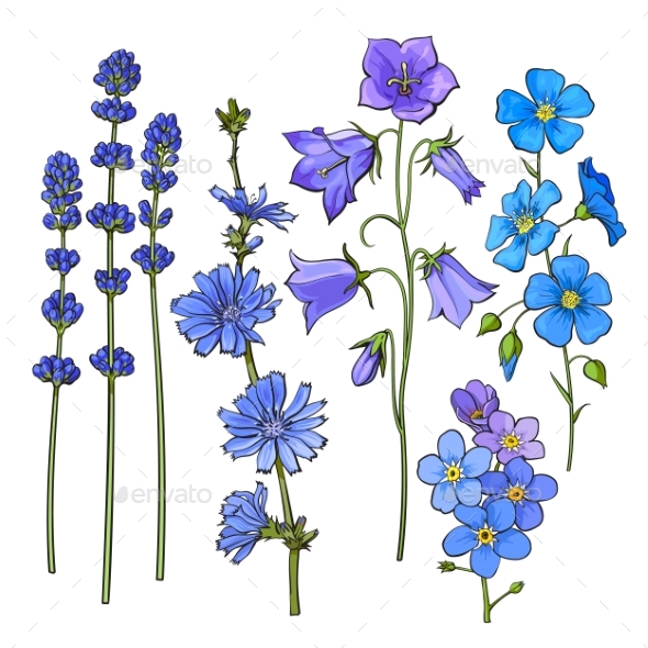 Hand Drawn Blue Flowers - Flowers & Plants Nature