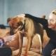 Man Having Fun With Dog At Home
