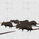 Rats Running - VideoHive Item for Sale