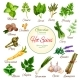 Hot Spices, Herbs and Vegetable Greens Poster - GraphicRiver Item for Sale