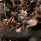 Many Ants in an Anthill