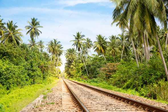 Palm forest across railway road on Sri Lanka - Stock Photo - Images