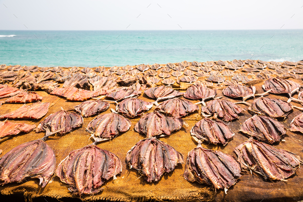 Tuna drying process on the coast of Sri Lanka - Stock Photo - Images