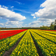 Wonderful tulips by springtime. Keukenhof Gardens. - PhotoDune Item for Sale