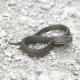 Snake on Stony Ground
