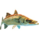 Barracuda - GraphicRiver Item for Sale