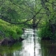 Small River in the Spring in the Green Nature - VideoHive Item for Sale