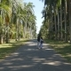 Young Man and Woman Going Along Exotic Parkland Lane, Viewing at Palm Tree and Doing Selfie Photo