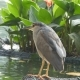 Beautiful Bird Sits on the Lake Shore