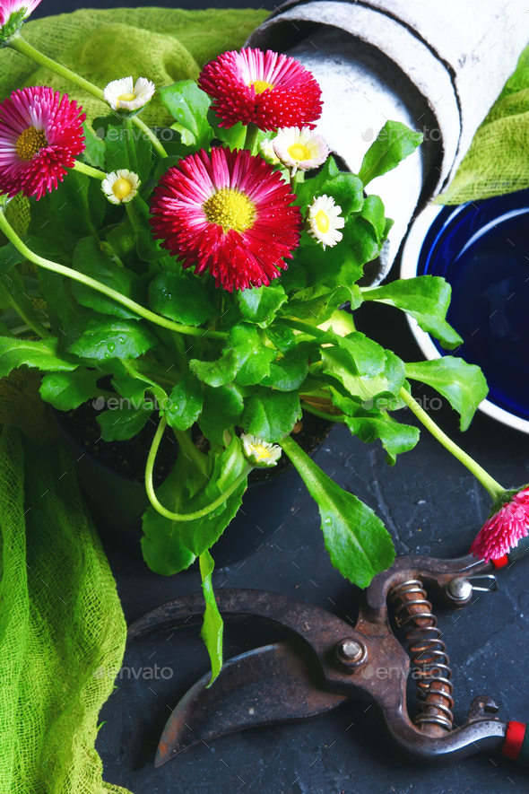 Spring flower and garden tools - Stock Photo - Images