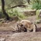 Two Big Dogs Are Playing,  of Young and Happy Dog in Fight
