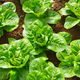 Download vegetables in the hydroponic farm from PhotoDune