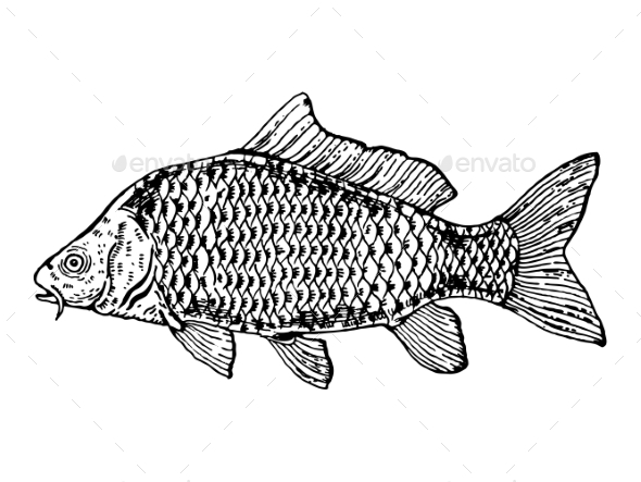 Carp Fish Engraving Style Vector Illustration - Miscellaneous Vectors