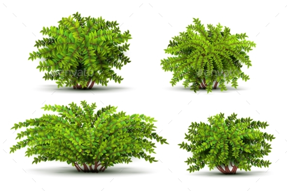 Shrubbery 3D Isometric Bushes Isolated on White - Flowers & Plants Nature