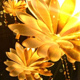 Gold Flowers Background - VideoHive Item for Sale