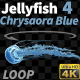 Jellyfish Chrysaora Blue 4 - VideoHive Item for Sale