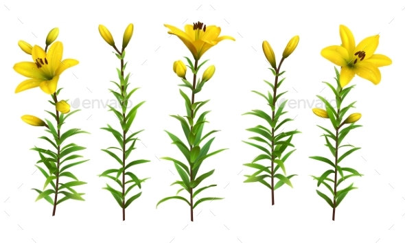 Yellow Lilies with Leaves - Flowers & Plants Nature