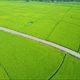 Aerial Drone Motion along Ground Road Amang Rice Fields