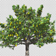 Pear Tree - VideoHive Item for Sale