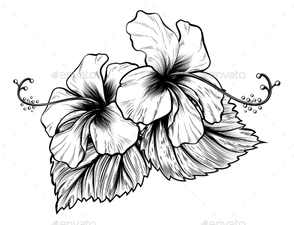 Hibiscus Flowers Vintage Style Woodcut Engraved - Flowers & Plants Nature