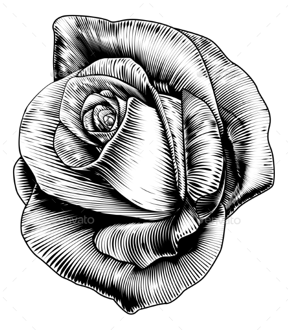 Rose Flower in Engraved Etching Woodcut Style - Flowers & Plants Nature