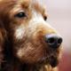 Dog muzzle - PhotoDune Item for Sale