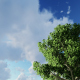 Trees and Clouds - VideoHive Item for Sale