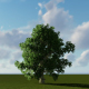 Single Tree and Moving Clouds - VideoHive Item for Sale