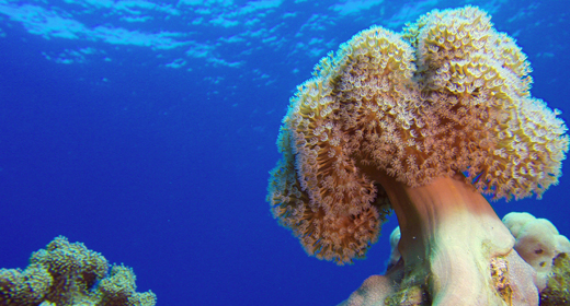Colorful Soft and Hard Corals