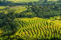 Rice Fields in Sumbava