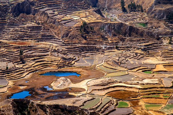 Terrace fields in the Canyon Colca - Stock Photo - Images