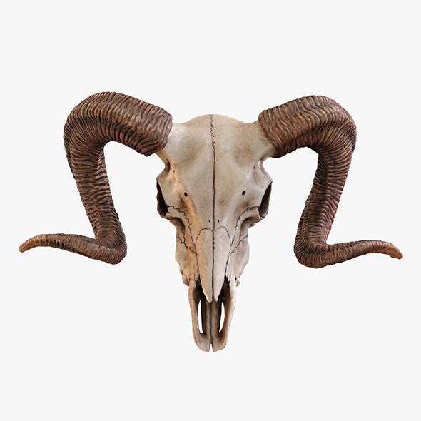 Ram Skull - 3DOcean Item for Sale