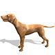 Vizsla Dog - 3DOcean Item for Sale