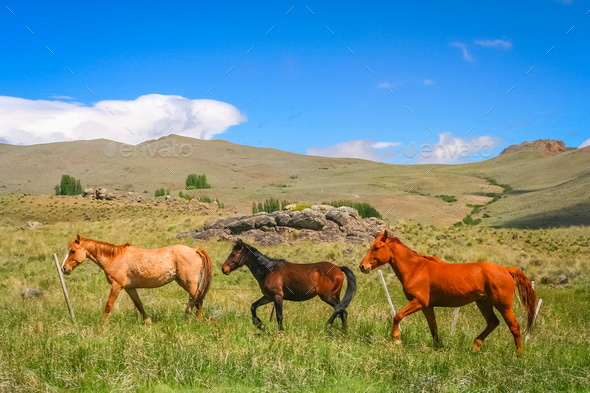 Three Horses on a meadow - Stock Photo - Images