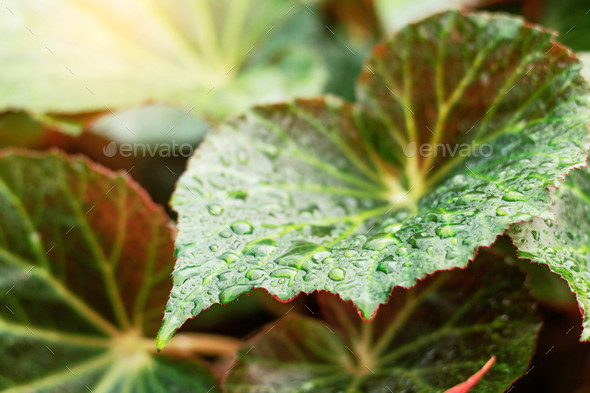 leaves in the rainy season - Stock Photo - Images