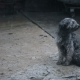 Dog Under Rain Waiting For - VideoHive Item for Sale