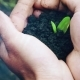 Man Hands Holding a Little Green Sprout - VideoHive Item for Sale