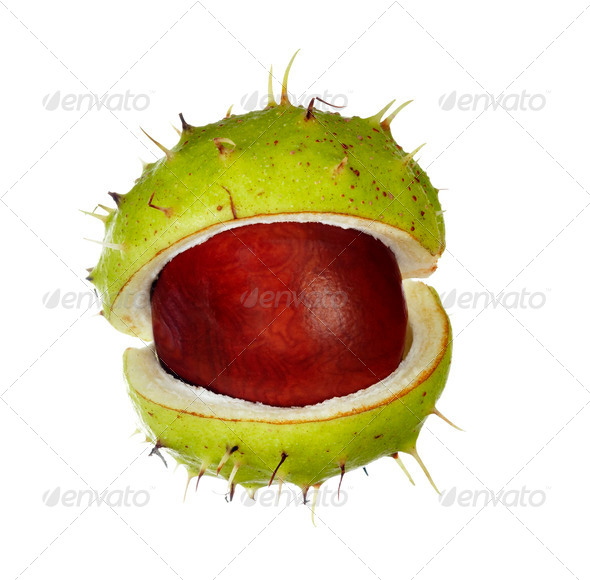chestnut - Stock Photo - Images