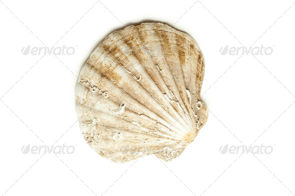 sea shell - Stock Photo - Images
