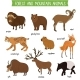 Forest and Mountain Animals Isolated Vector Set - GraphicRiver Item for Sale