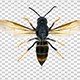 Wasp - VideoHive Item for Sale