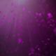 Purple Rose Petals - VideoHive Item for Sale