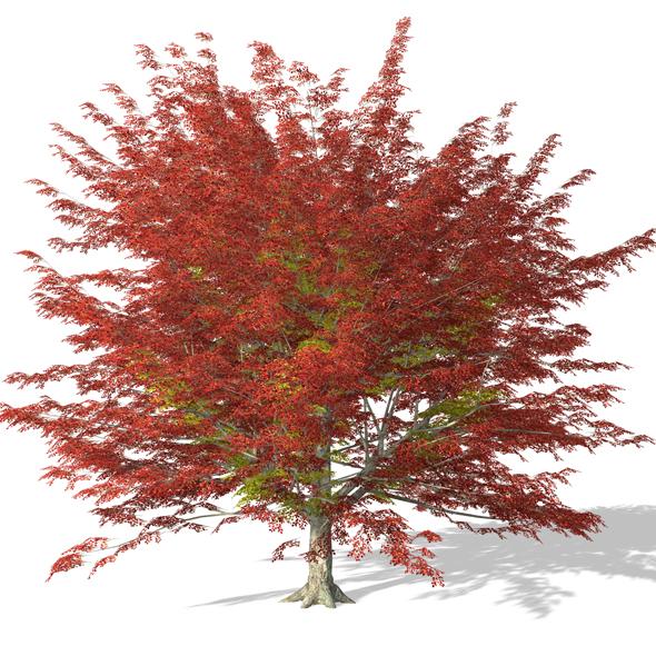 Tree - 00003 - 3DOcean Item for Sale