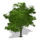 Tree - 00002
