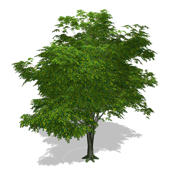 Tree - 00002 - 3DOcean Item for Sale