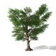 Tree - 00006