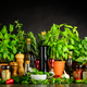 Still Life wit Cooking Ingredients, Herbs and Utensils - PhotoDune Item for Sale