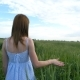 A Young Beautiful Girl Walks the Green Wheat Field, Passing Her Hand Over the Spikelets