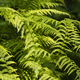 Green Fern leaf fronds - PhotoDune Item for Sale