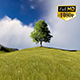 Tree On Hill - VideoHive Item for Sale